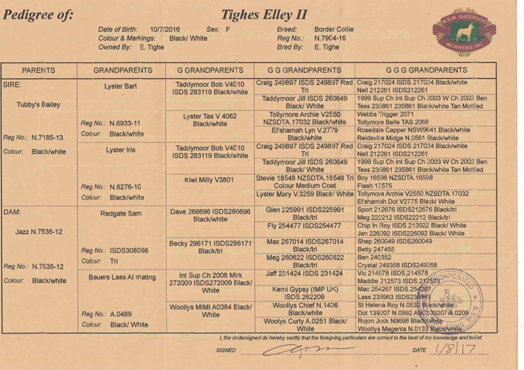 Tighes Elley II pedigree