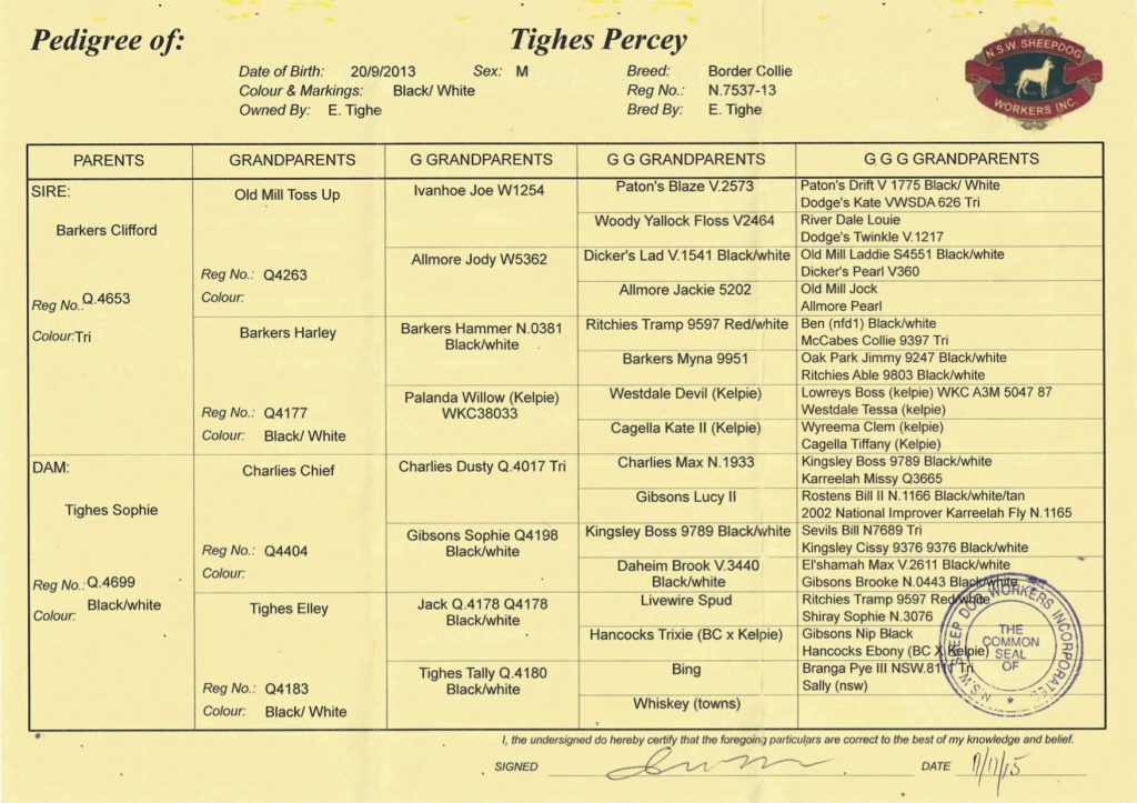 Tighes Percey pedigree